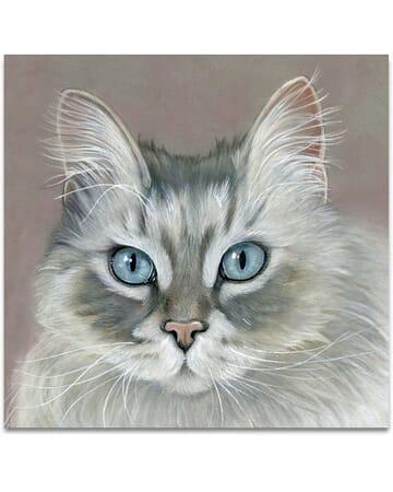 The Blue Eyes Cat