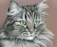 Cat Potraits